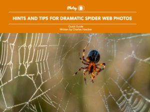 Hints and Tips for Dramatic Spider Web Photos - Free Quick Guide