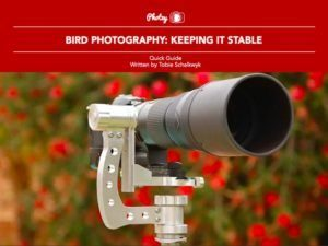 Bird Photography: Keeping It Stable - Free Quick Guide