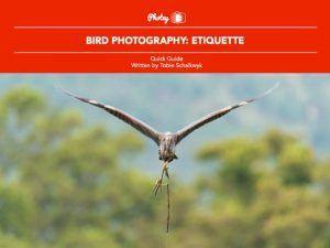 Bird Photography: Etiquette - Free Quick Guide