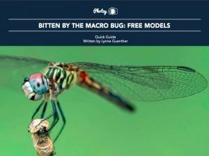 Bitten by the Macro Bug: Free Models - Free Quick Guide