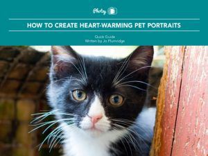 How to Create Heart-Warming Pet Portraits - Free Quick Guide