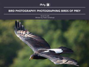 Bird Photography: Birds of Prey - Free Quick Guide